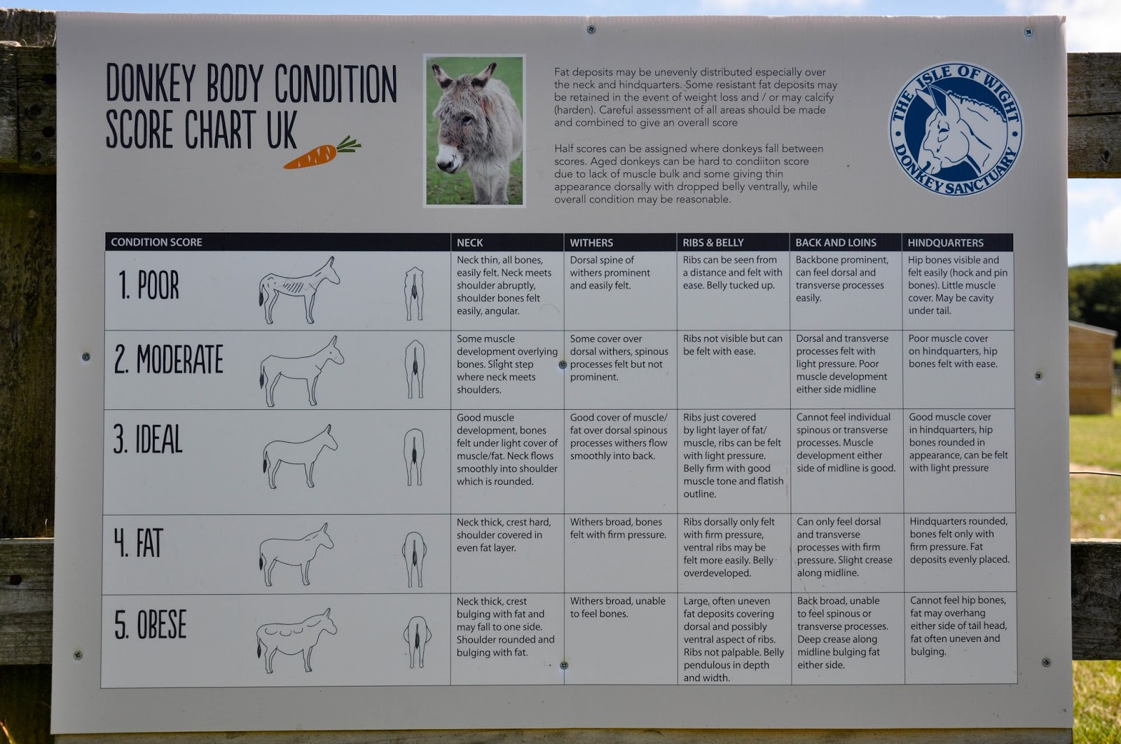 Donkey Body Condition Score Chart, The Donkey Sanctuary, Isle of Wight, UK