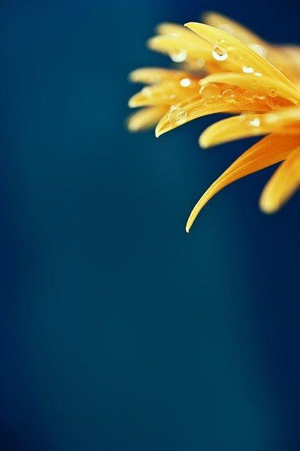 flower cute wallpaper