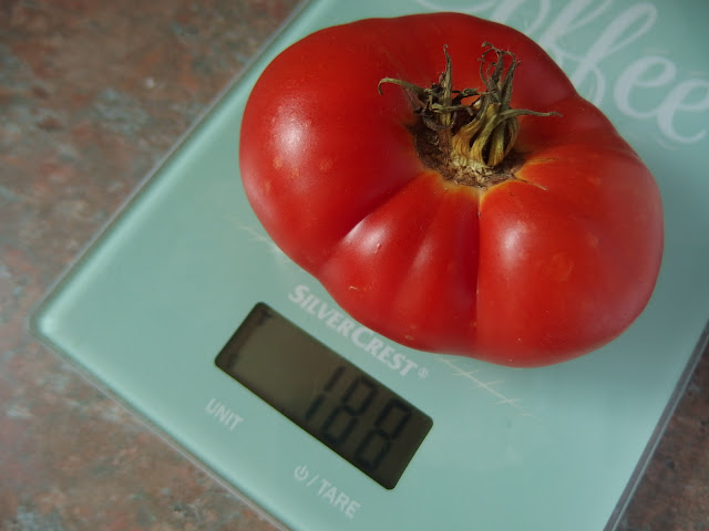 Tomato weigh-in