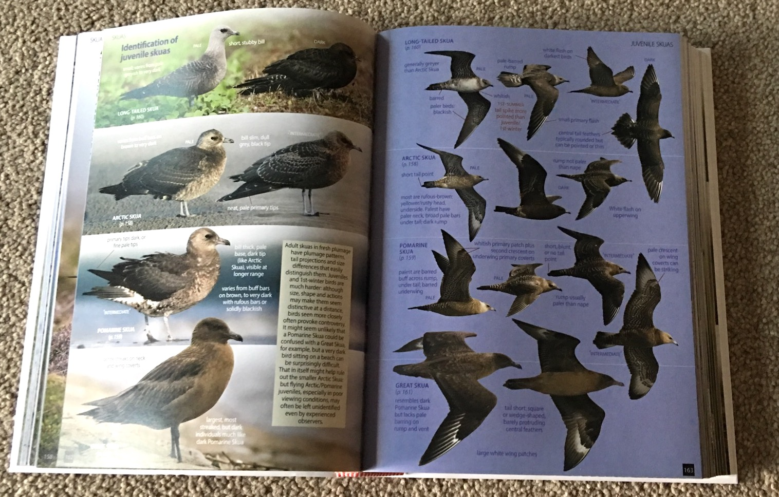 Birds Of Britain And Ireland We All Love A Field Guide But You Certainly Dont Want Another One If Its Just Shelf Filler Never Used