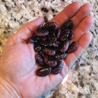 Photo of a handful of dried scarlet runner beans. https://trimazing.com/
