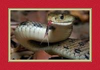 Snake Bite on Leg Dream Meaning and Interpretations – DREAMLAND