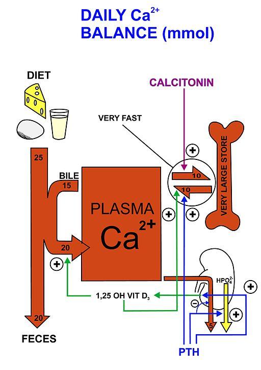 Ketidakseimbangan kalsium