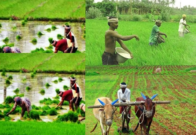 বাংলাদেশের কৃষি ও আন্তর্জাতিক প্রেক্ষাপট | Bangladeh Agriculture