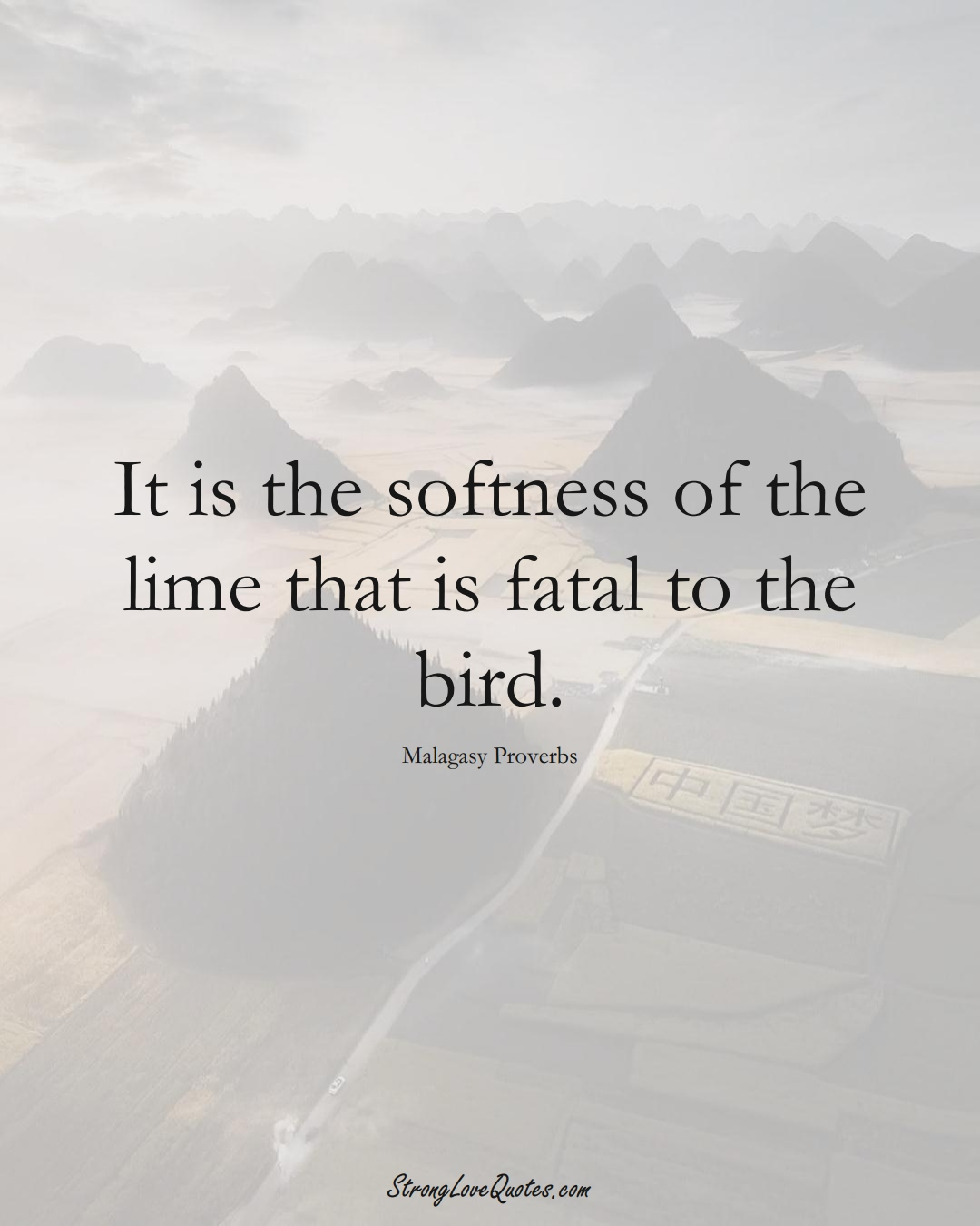 It is the softness of the lime that is fatal to the bird. (Malagasy Sayings);  #AfricanSayings