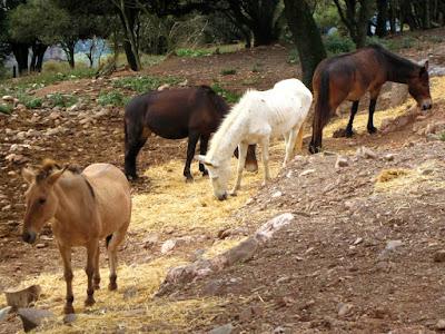 Burros y caballos en La Mola