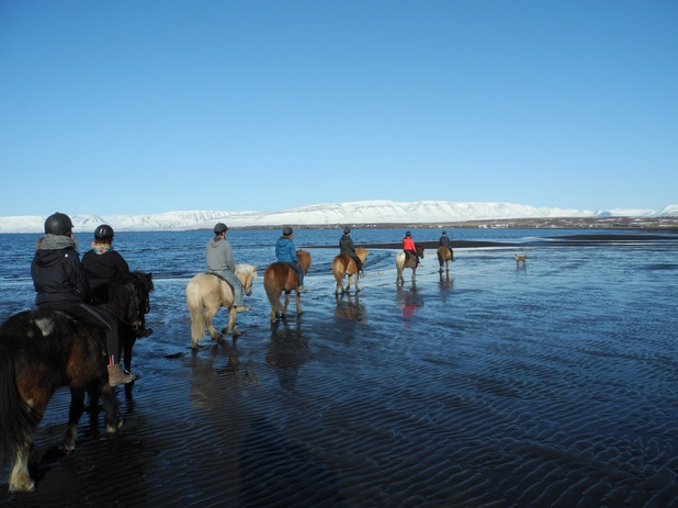 Conoce el norte de Islandia. Skagafjörður y Sauðárkrókur