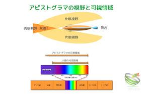 アピストグラマの視野と可視領域