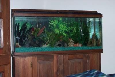 7 Amazing Aquarium Stands to Enhance Your Home Decor