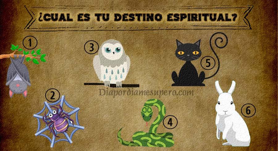 Test: ¿Cuál es tu destino espiritual? Elige un animal y descúbrelo!