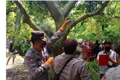 Semalam Tak Pulang,Pria Tua Ditemukan Gantung Diri Di Pohon Mangga