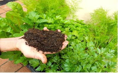 Keuntungan Pupuk Organik Dan Kerugian Pupuk Kimia ; perbedaab pupuk organik dengan pupuk kimia