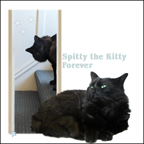 Spitty the Kitty