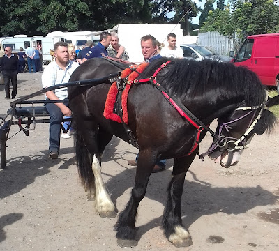 Brigg Horse Fair 2017 picture three by Nigel Fisher