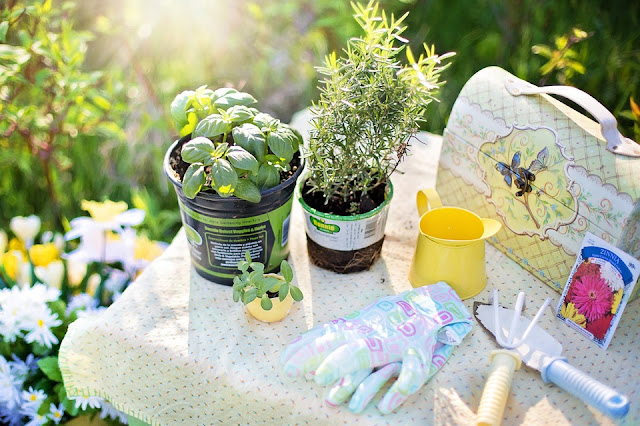 potted herbs with garden tools