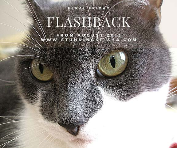 Flashback Feral Friday: Extreme Closeup