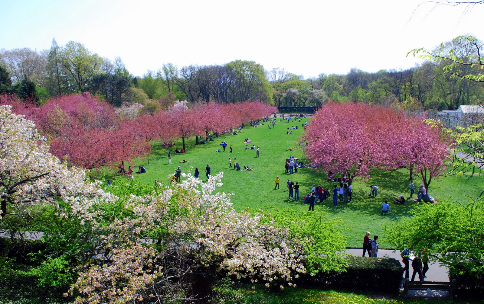 Scene of the crime with author susan elia macneal kittling books for Brooklyn botanical garden parking