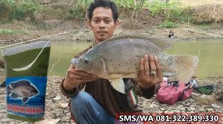 Umpan Ikan Nila Khusus Babon