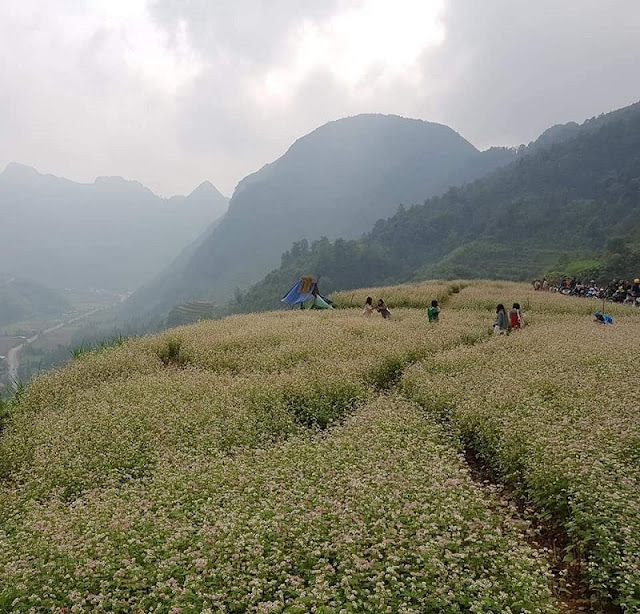 Top 5 Places To Have The Best Experience In Northern Vietnam This Winter 4