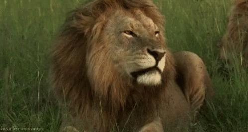 Llamaron al 911 para reportar a un león en las calles y resultó ser un perrito con melena