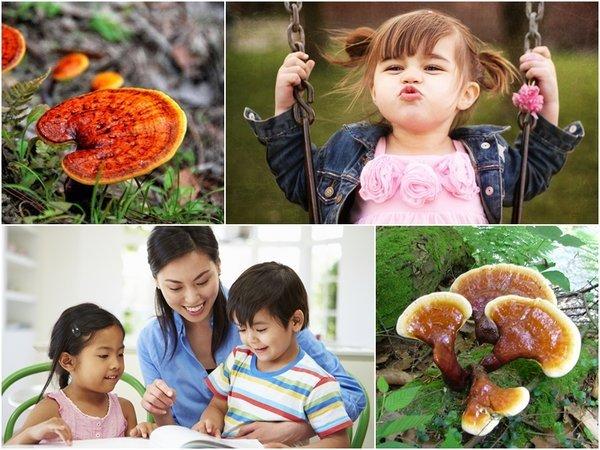 Nấm linh chi đỏ là dược liệu cần thiết đối với sự phát triển của trẻ