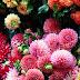 Ein Blumenjahr - Vom Hügel - September + Hoffest + Buchpräsentation