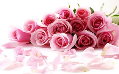 red rose flower images