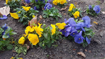 (Almost) Wordless Wednesday - purple and yellow flowers