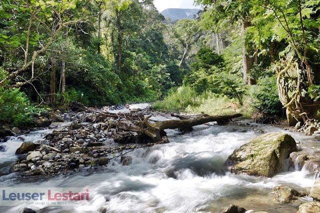Hutan Ketambe, Dulu Dan Nanti