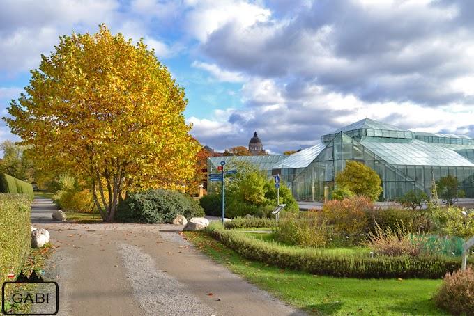 Sztokholmski botanik jesienią