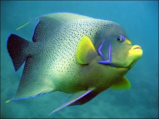 How to Keep Phosphate Under Control in the Aquarium?