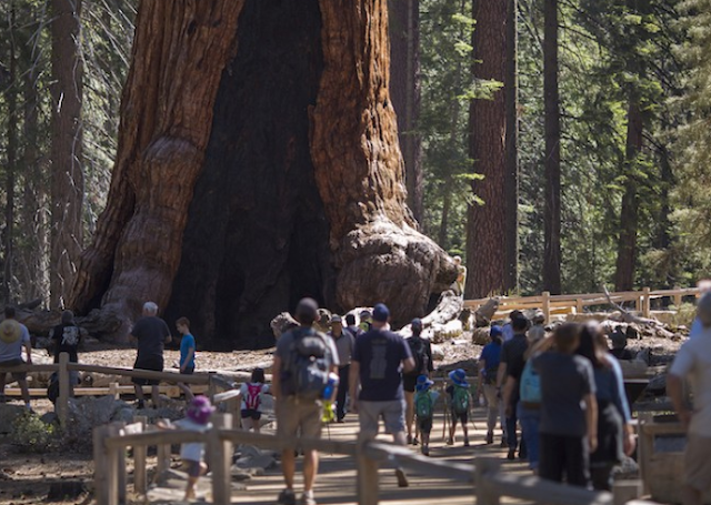 Raksasa kuno Yosemite, di bawah satu miliar bintang