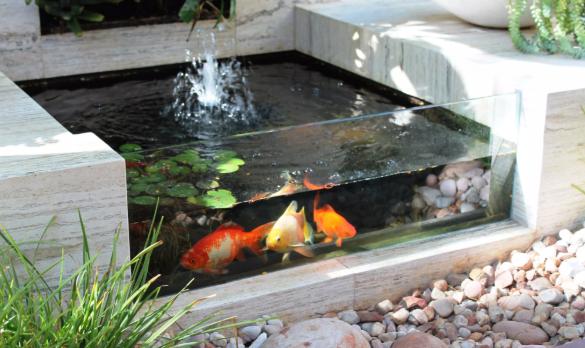 Ingin Memperindah Taman? Berikut 8 Cara Buat Kolam Ikan Koi dengan Mudah