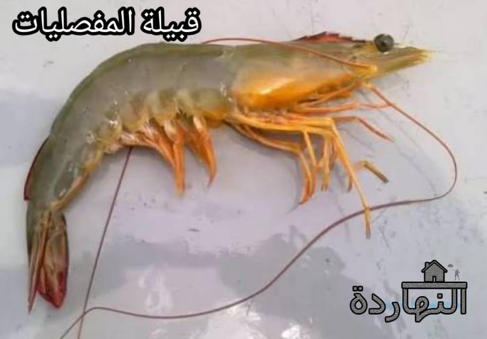 قبيلة المفصليات  Phylum Arthropoda