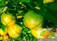 Logo Arancia Ladyrosa: vinci gratis ogni settimana un pacco degustazione