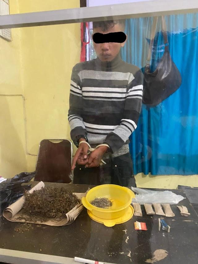 Sat Narkoba Polres Taput Tangkap  Seorang  Pemakai Ganja