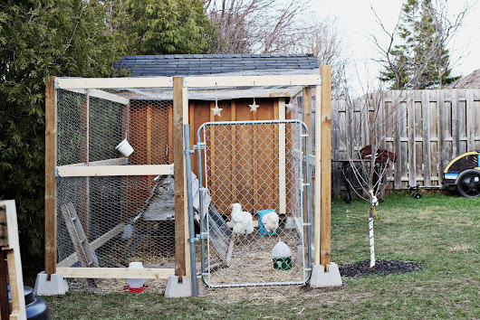 "The Chicken ""Yard"""