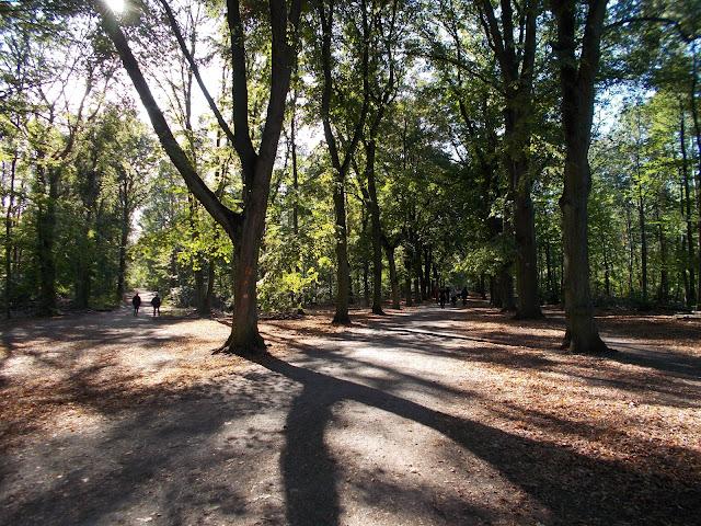 グルーネヴァルト、森林サイクリング