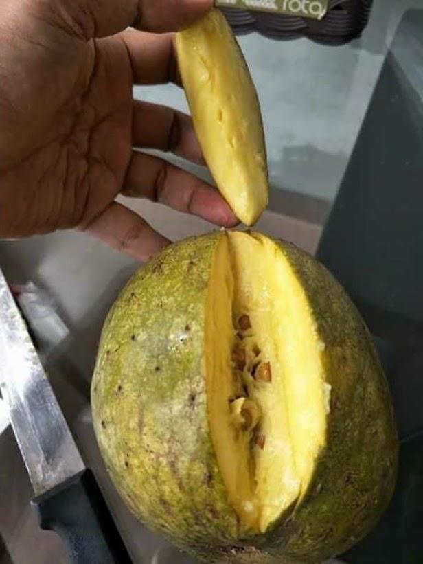 bibit tanaman buah sirsak kuning Palembang