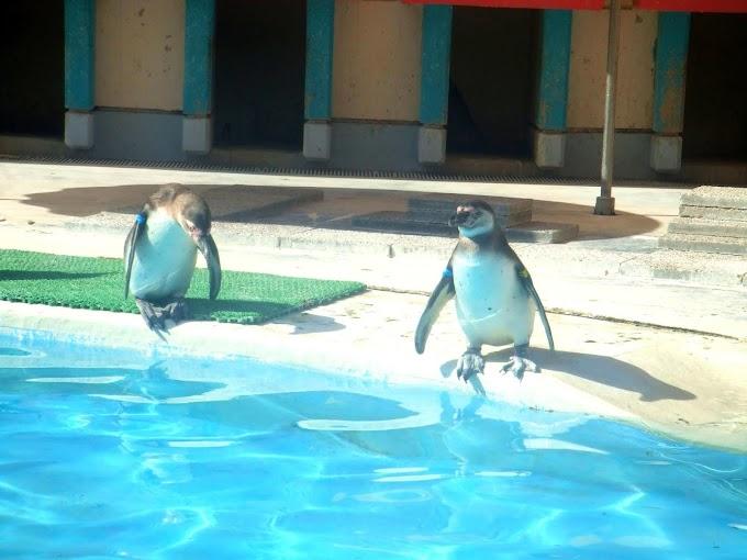 144 #ペンギン #水族館 #動物 #風景 #鳥