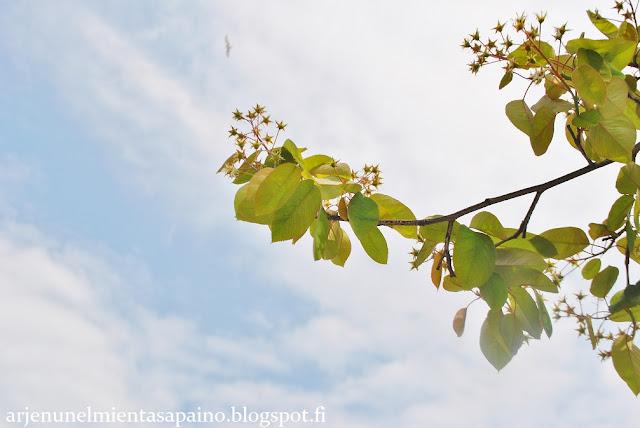 Tukholma, kevät, toukokuu, kaupunkiloma,