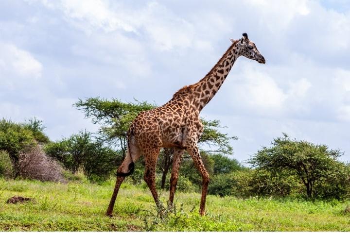 visit-cost-kenya-3