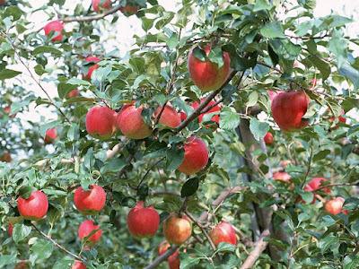 Fall Farm Attractions Near Durand
