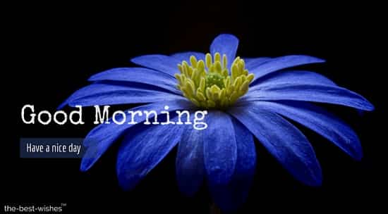 pictures of flowers with anemone flower blossom bloom blue