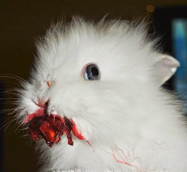 omorfos-kosmos.gr - 12 ζώα που τρώνε φράουλες και μοιάζουν να βγαίνουν από ταινία τρόμου (Εικόνες)