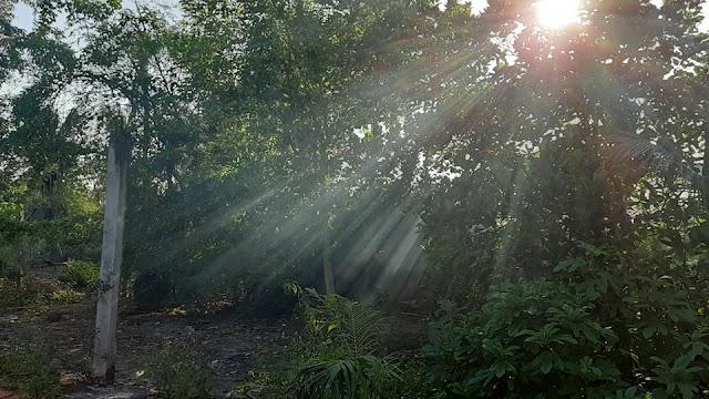 Nắng chiều xiên qua kẽ lá