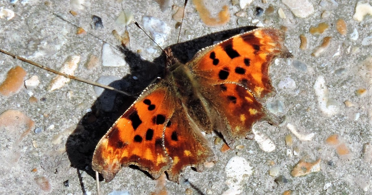 April lepidoptera