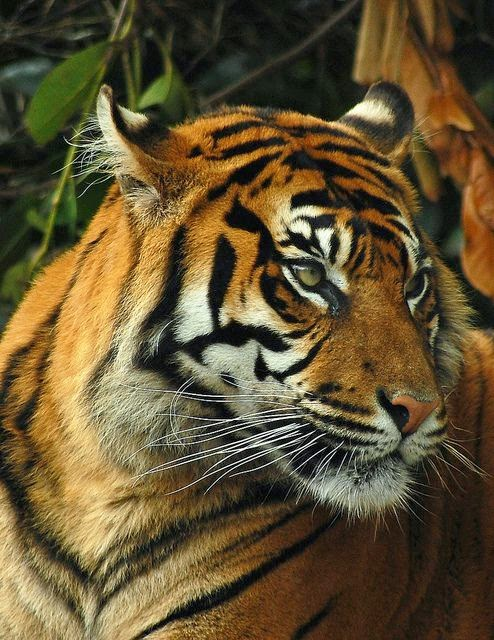 10 of the World's Most Famous Zoos - Chester Zoo, Cheshire, England
