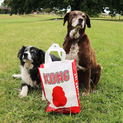 Two dogs display KONG showbag available at Doggy Day Out Pakenham