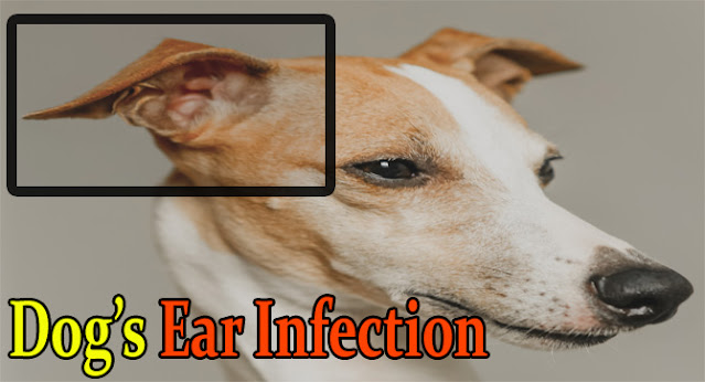 FDA-approved-antibiotics-for-dogs-ear-infections